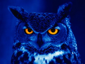 blue-owl